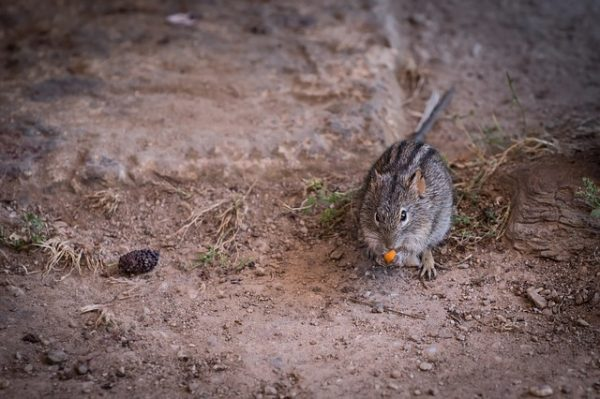 mouse on ground
