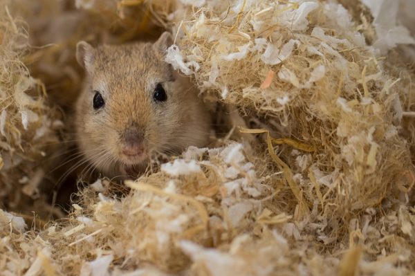 sheltered mouse